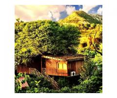 Tree House Rersort Jaipur | Wedding Venue in Jaipur