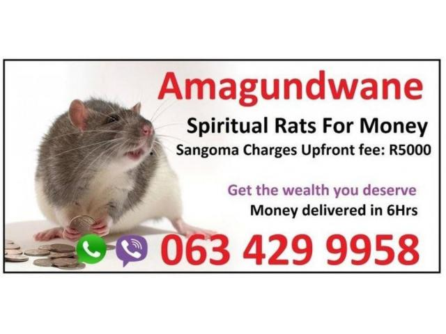 Strong Money Spells in Singapore | Chicago | Toronto with spiritual rats +27634299958