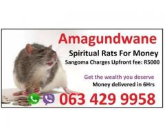 Strong Money Spells in Ireland | New Zealand | USA with Spiritual rats +27634299958